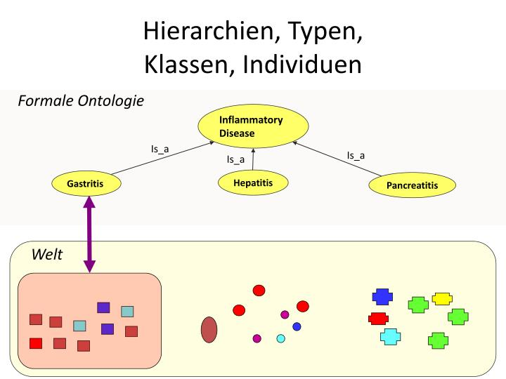 Hierarchien, Typen,