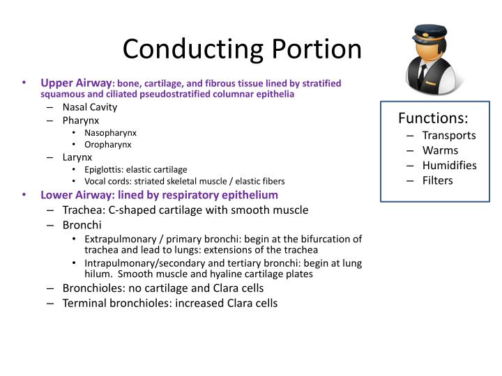 Conducting Portion