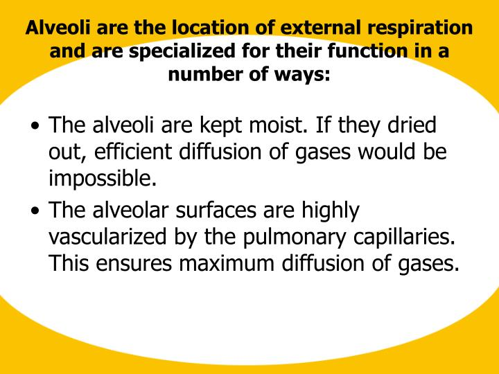 The alveoli are kept moist. If they dried out, efficient diffusion of gases would be impossible.