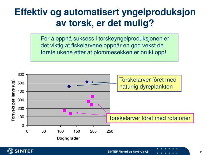 Effektiv og automatisert yngelproduksjon av torsk, er det mulig?