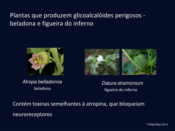 Plantas que produzem