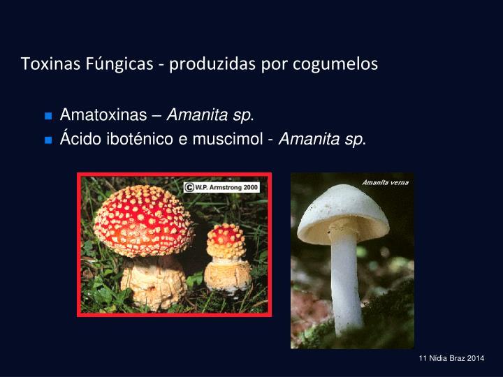 Toxinas Fúngicas - produzidas por cogumelos