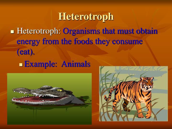 Heterotroph