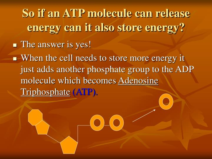 So if an ATP molecule can release energy can it also store energy?