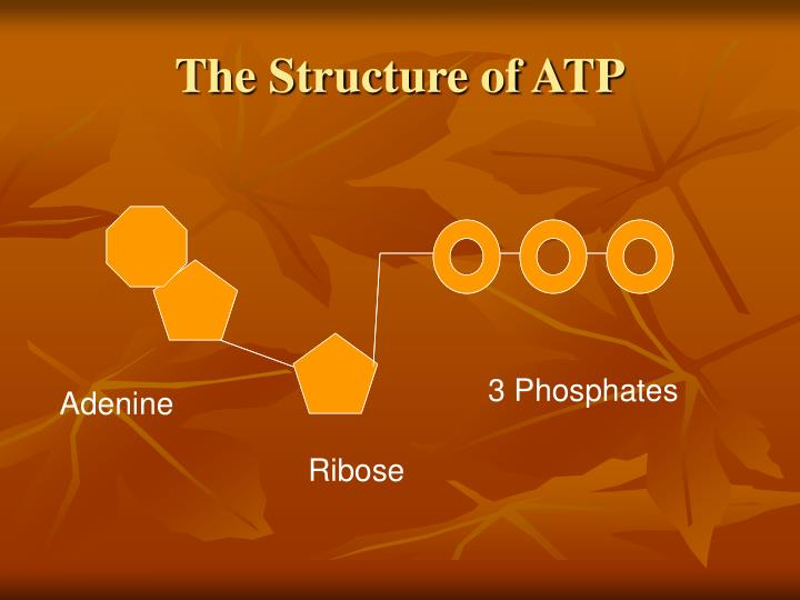 The Structure of ATP