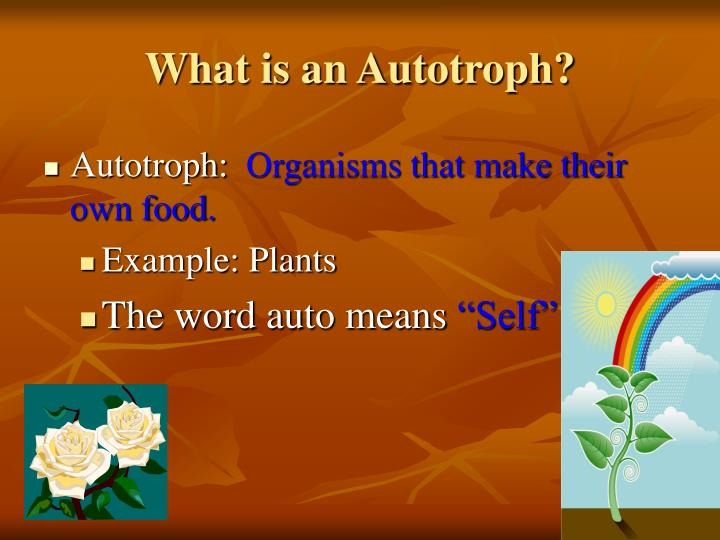 What is an Autotroph?
