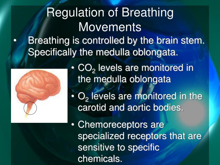 Regulation of breathing movements