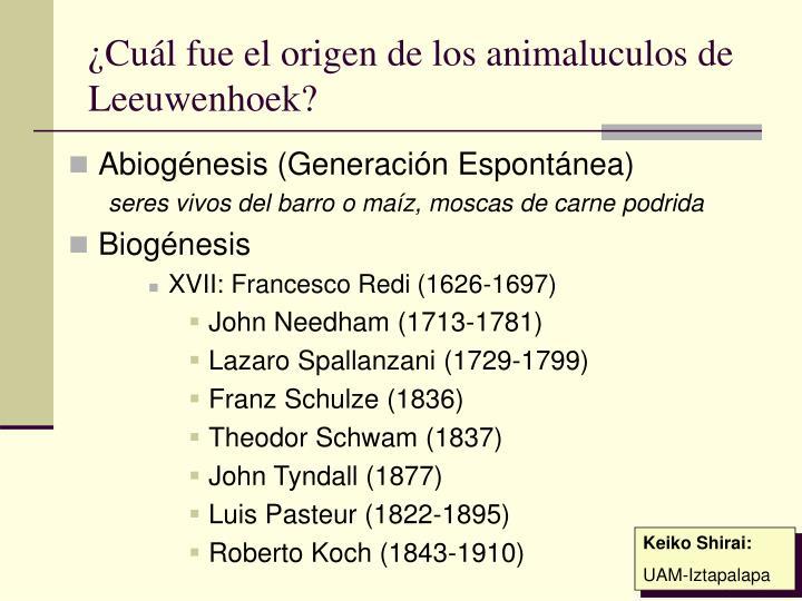 ¿Cuál fue el origen de los animaluculos de Leeuwenhoek?