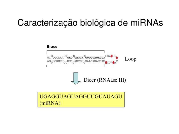 Dicer (RNAase III)