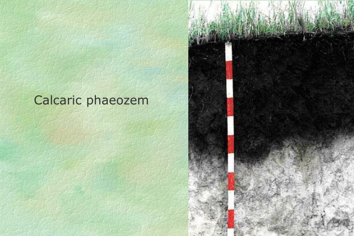 Calcaric phaeozem