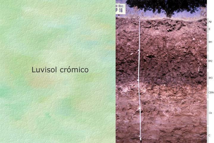 Luvisol crómico