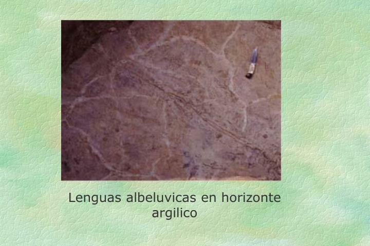Lenguas albeluvicas en horizonte argilico