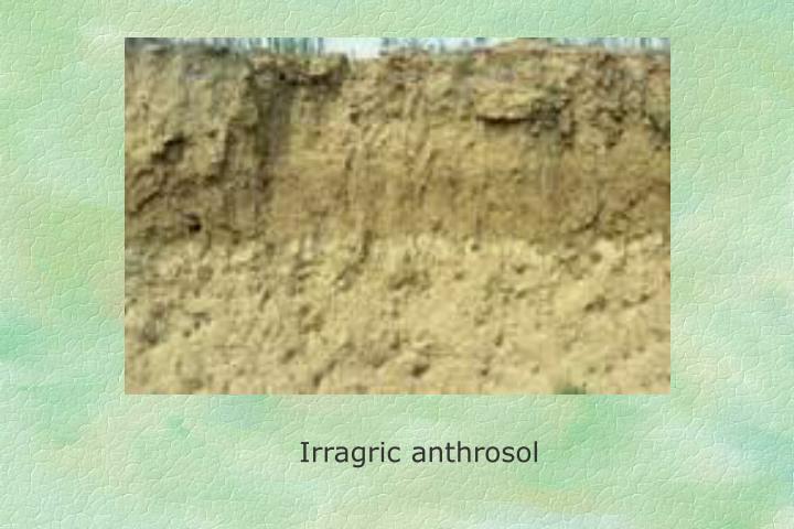 Irragric anthrosol