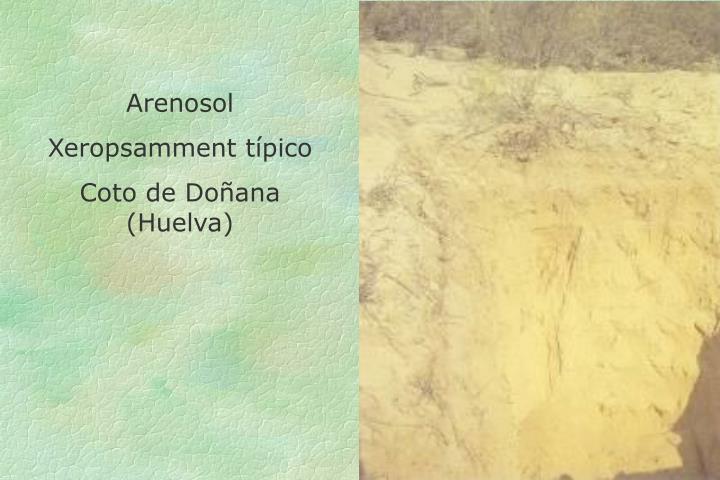 Arenosol