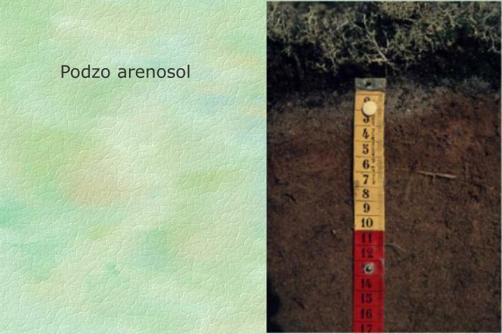Podzo arenosol