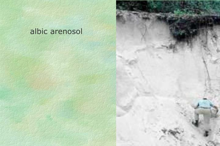 albic arenosol