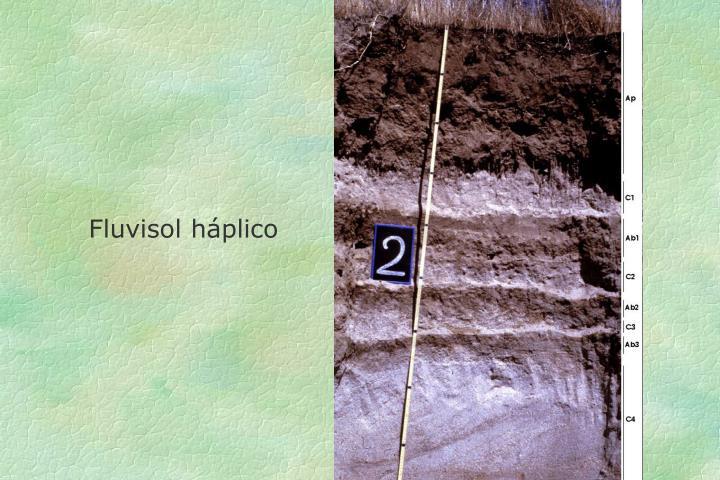 Fluvisol háplico