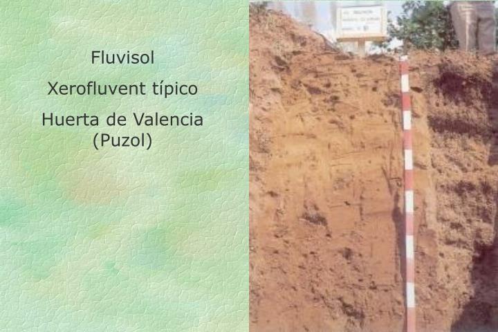 Fluvisol