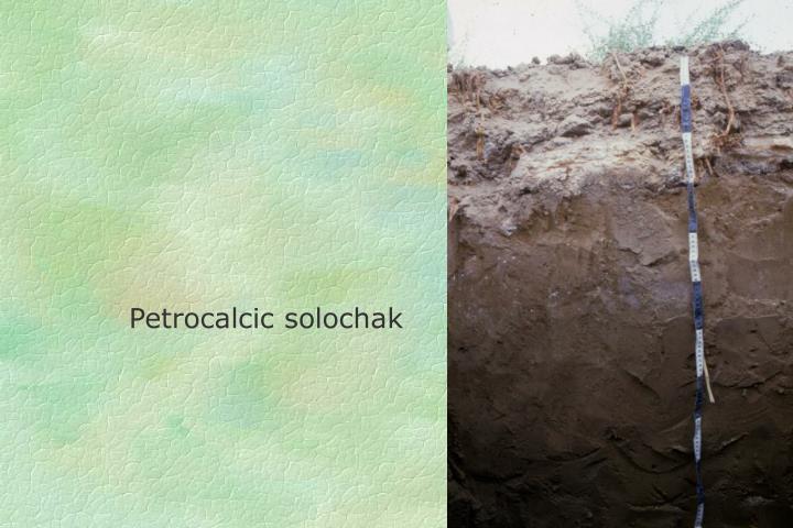 Petrocalcic solochak