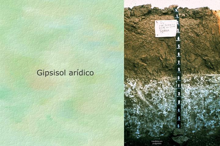 Gipsisol arídico