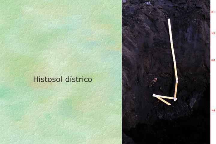 Histosol dístrico