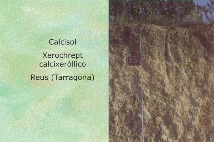 Calcisol