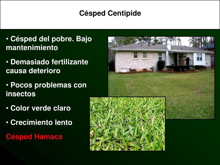 Césped Centipide