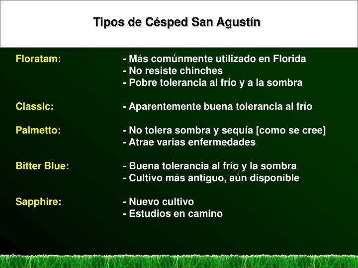Tipos de Césped San Agustín