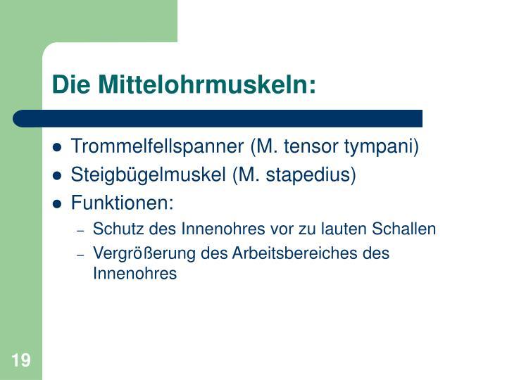Die Mittelohrmuskeln: