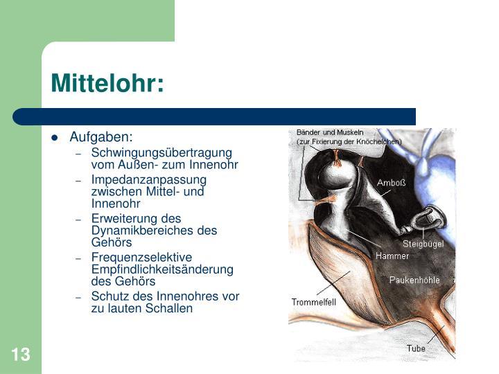 Mittelohr:
