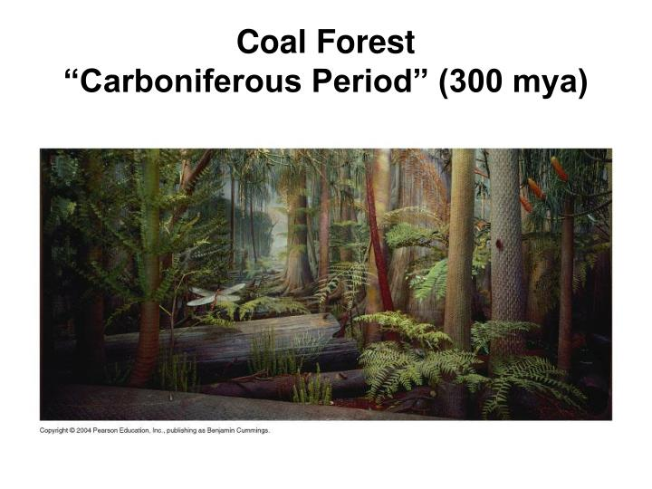 Coal Forest