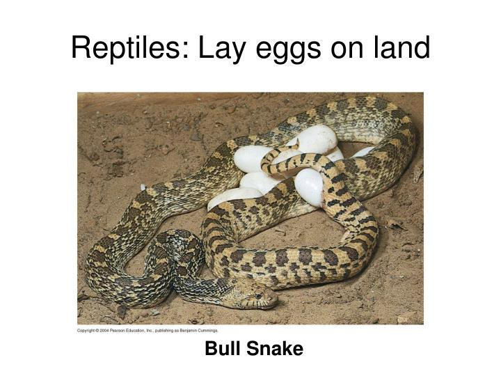 Reptiles: Lay eggs on land
