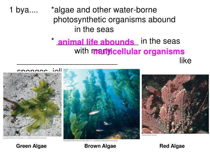 animal life abounds