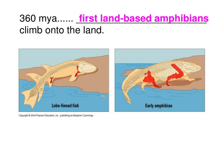 first land-based amphibians