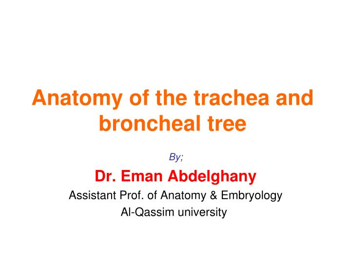 Anatomy of the trachea and broncheal tree
