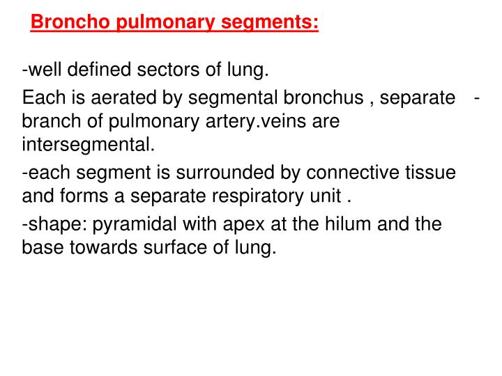 Broncho pulmonary segments: