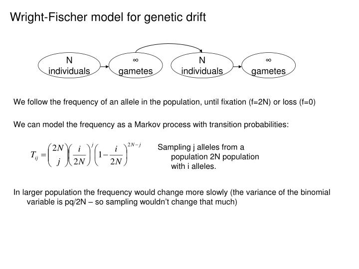 Wright-Fischer model for genetic drift