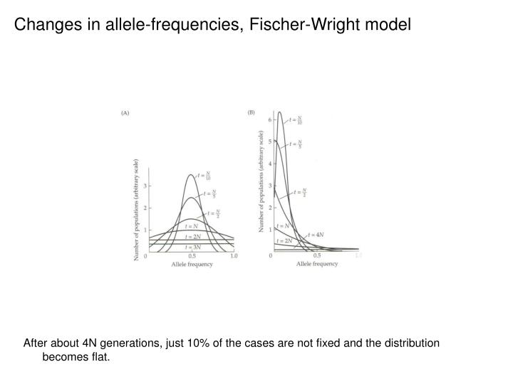Changes in allele-frequencies, Fischer-Wright model