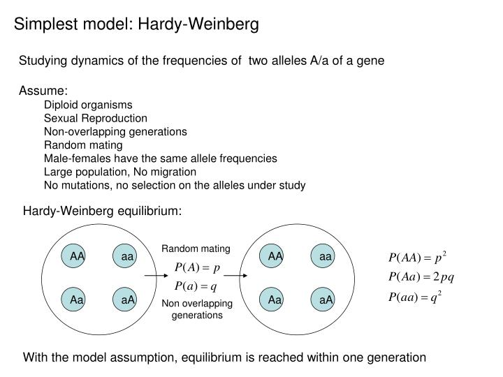 Simplest model: Hardy-Weinberg