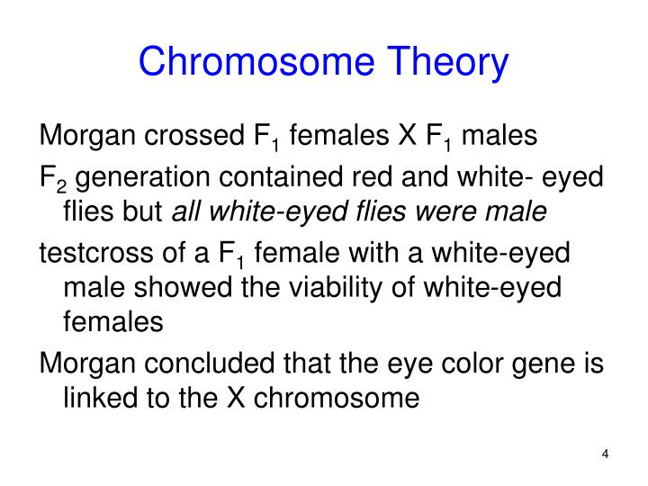 Chromosome Theory