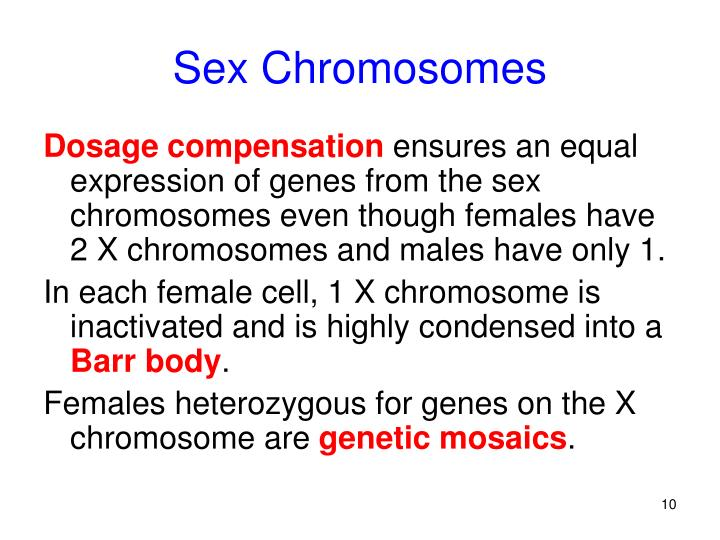 Sex Chromosomes
