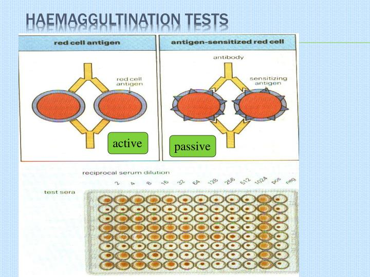 Haemaggultination