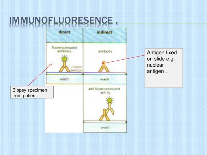 Immunofluoresence .