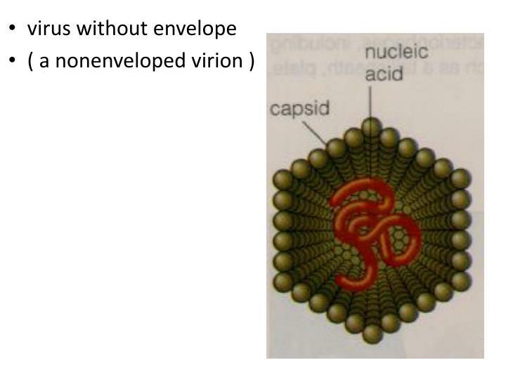 virus without envelope