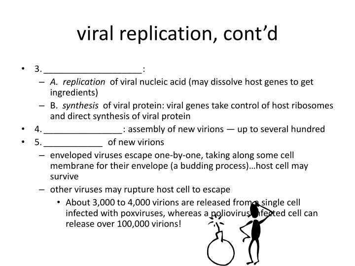 viral replication, cont