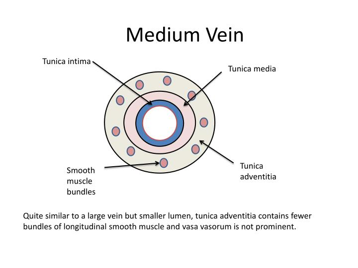 Medium Vein