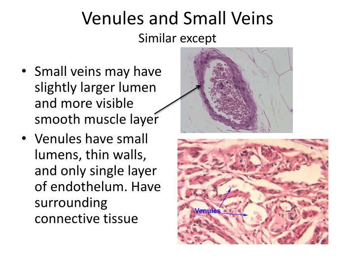 Venules