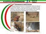 levantamiento de animales muertos