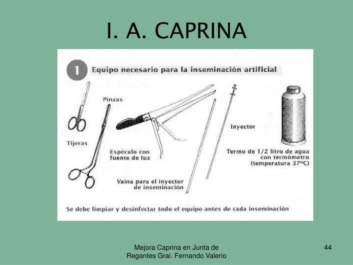 I. A. CAPRINA