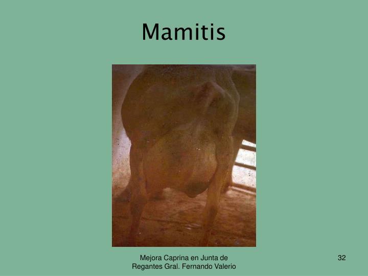 Mamitis